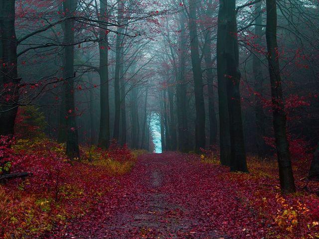 Labananequiparle-Forêt noire-Allemagne 2