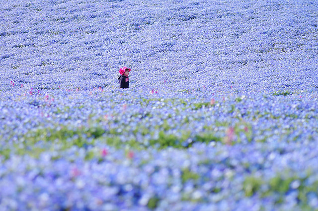 labananequiparle-Hitachi Seaside Park- Japon.2