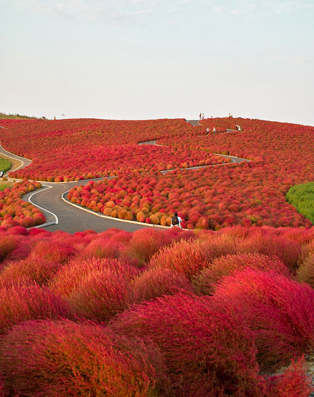 labananequiparle-Hitachi Seaside Park- Japon