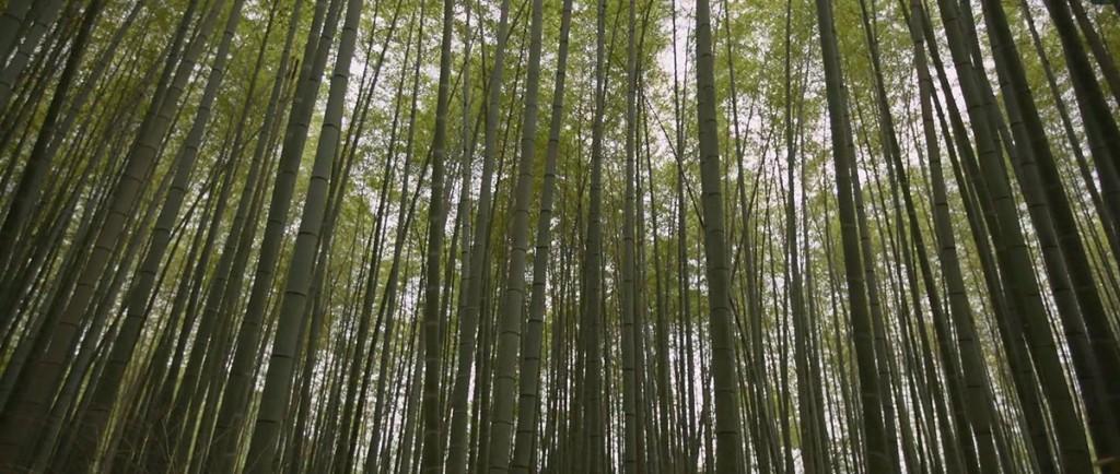 labananequiparle-foret-bambous