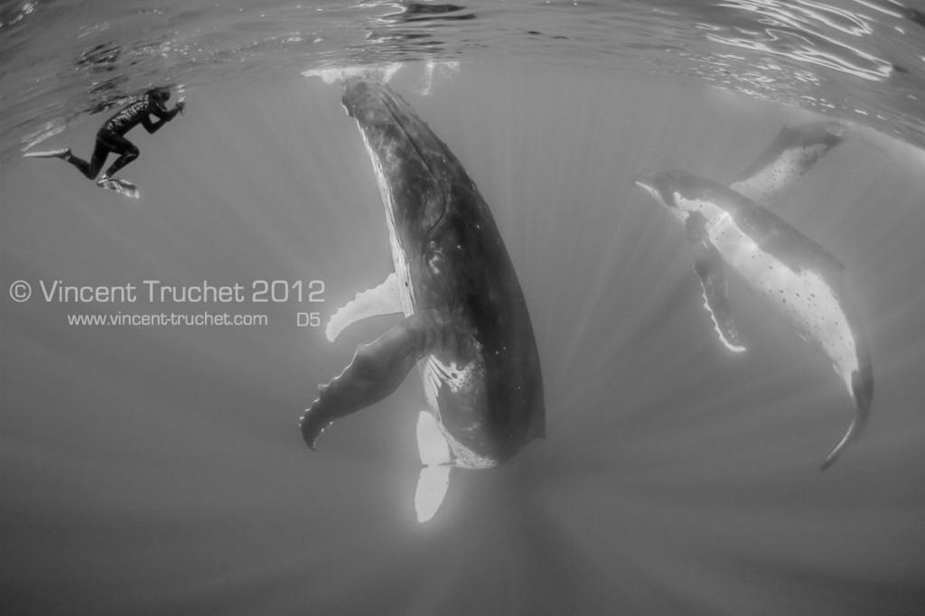 labananequiparle-vincent-truchet-baleine-a-bosse-et-photographe