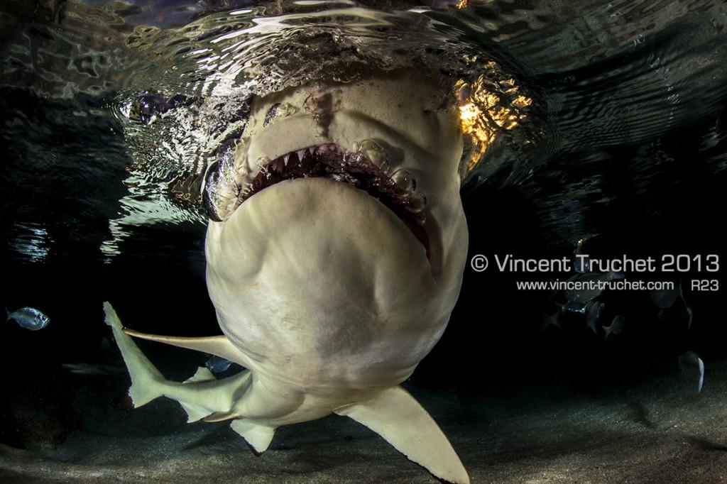 labananequiparle-vincent-truchet-dents-requin-pointes-noires