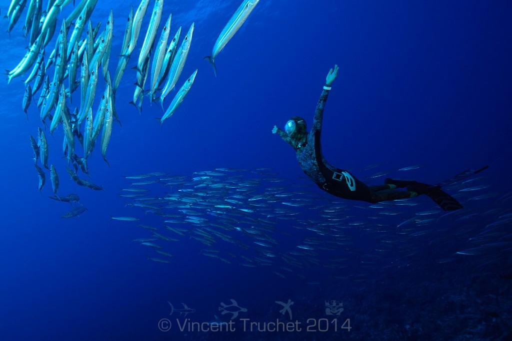 labananequiparle-vincent-truchet-plongeur-et-barracudas