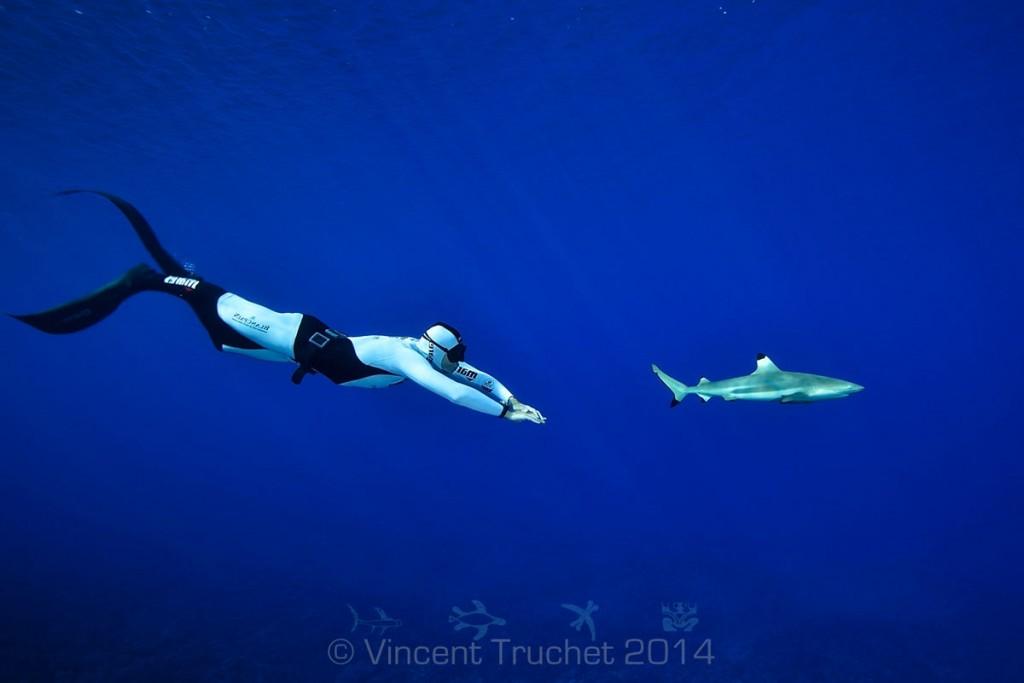 labananequiparle-vincent-truchet-plongeur-et-requin