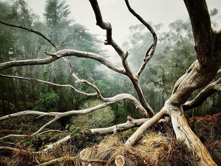 labananequiparle-arbre-foret