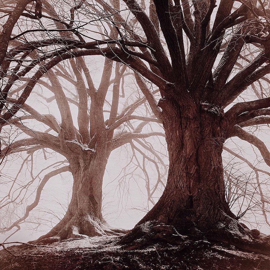 labananequiparle-arbre-marron