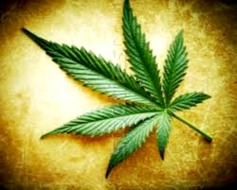 la cannabis: