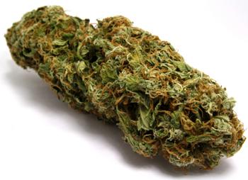 labananequiparle-cannabis-3