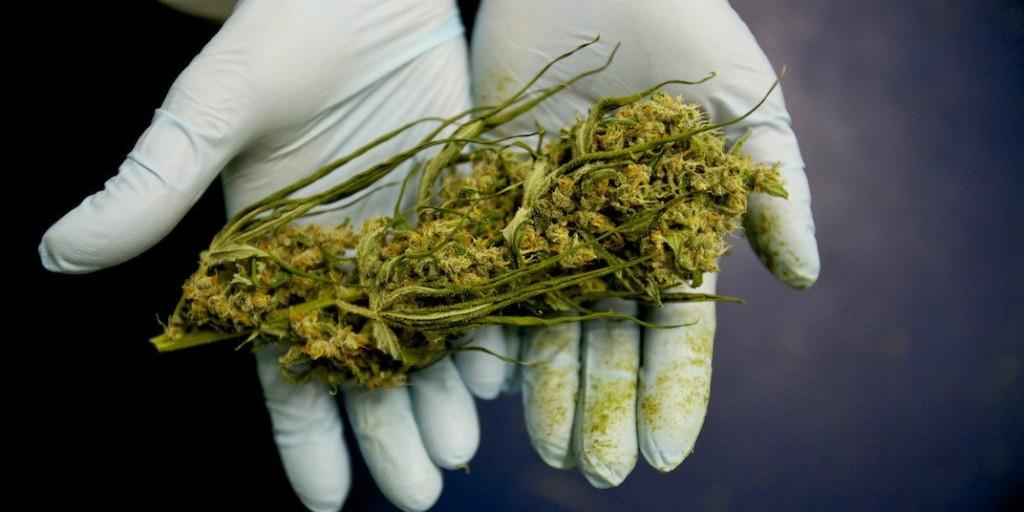 labananequiparle-cannabis-4