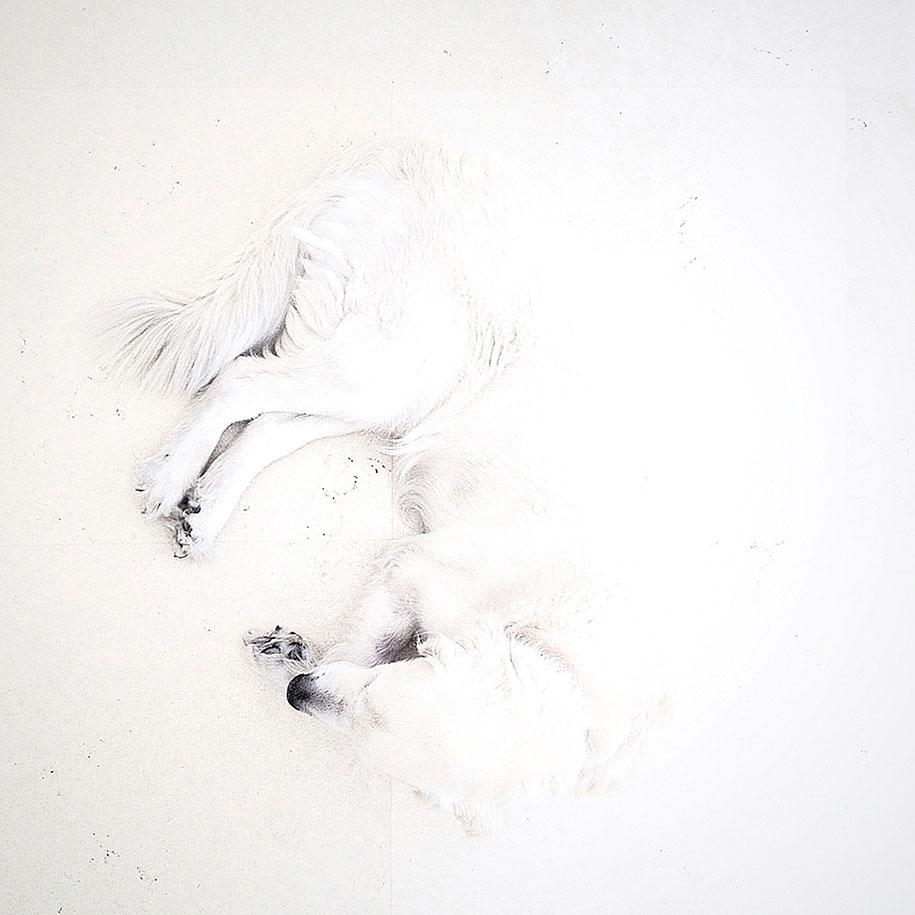 labananequiparle-chien-blanc