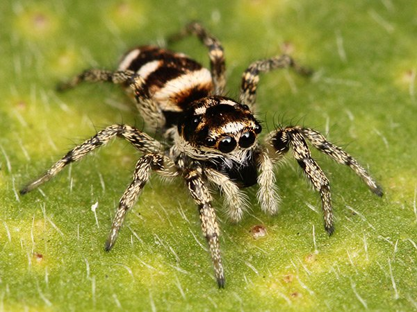 06-spiders