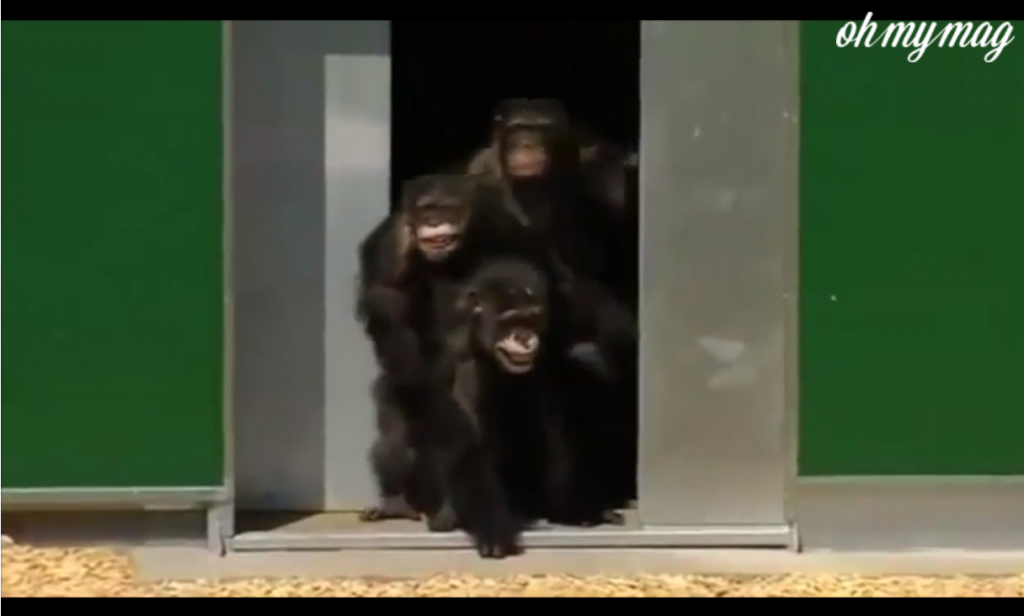 labananequiparle-animaux-cage-6