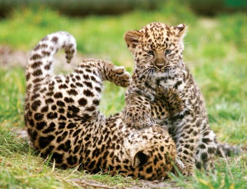 labananequiparle-bebes-animaux-1