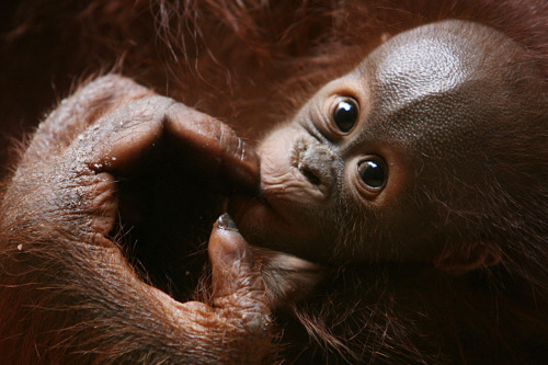 labananequiparle-bebes-animaux-7