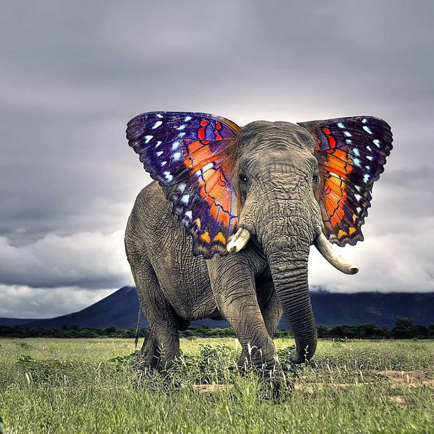 labananequiparle-animal-hybride-1