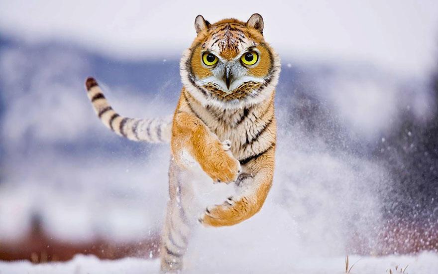 labananequiparle-animal-hybride-12