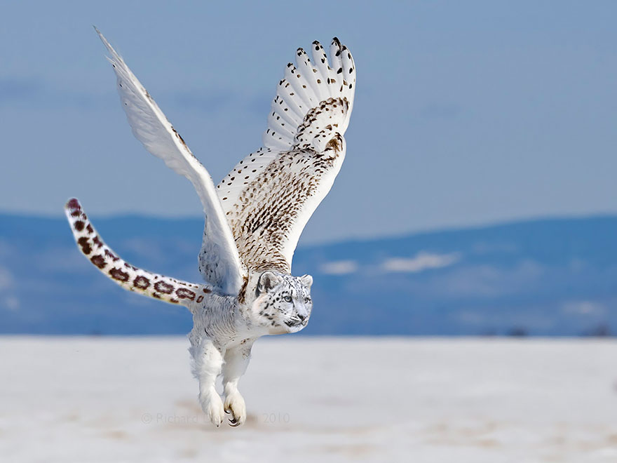 labananequiparle-animal-hybride-5