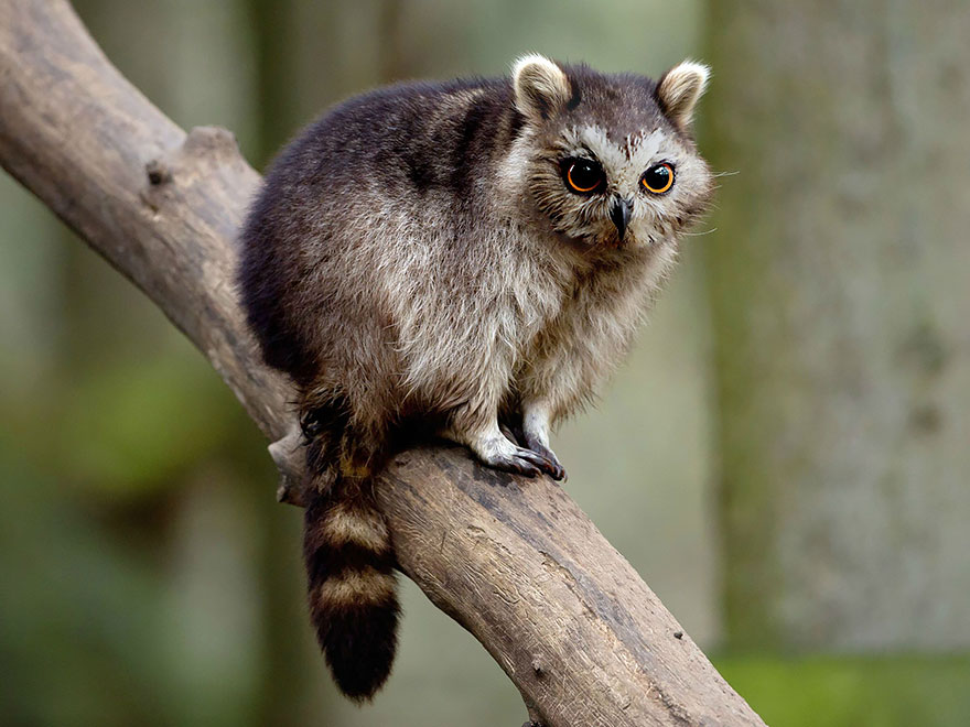 labananequiparle-animal-hybride-7
