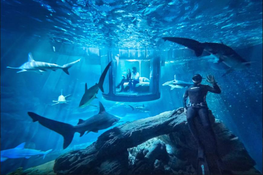 Passez-une-nuit-dans-l'Aquarium-de-Paris-au-milieu-de-35-requins-1