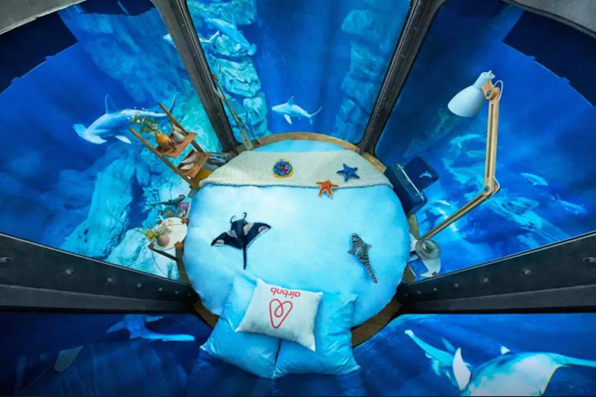 Passez-une-nuit-dans-l'Aquarium-de-Paris-au-milieu-de-35-requins-2