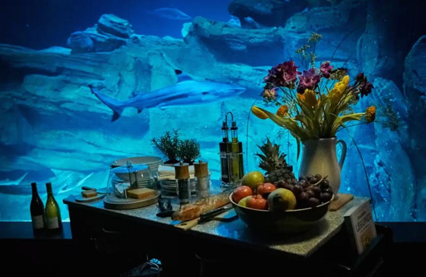 Passez-une-nuit-dans-l'Aquarium-de-Paris-au-milieu-de-35-requins-5