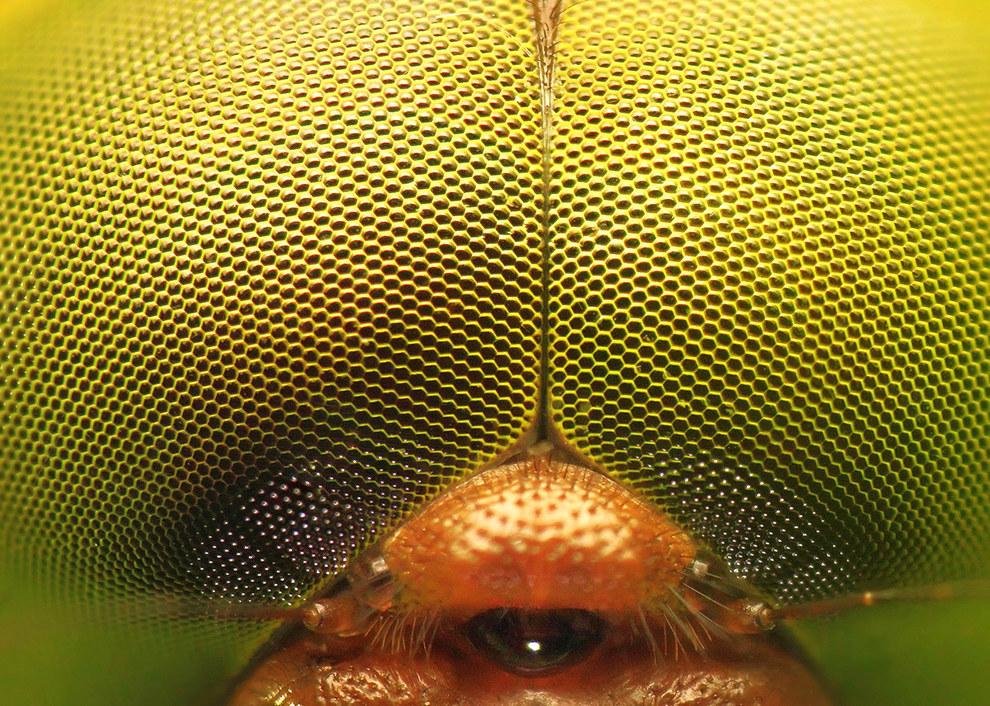 enhanced-buzz-wide-27606-1458744030-8