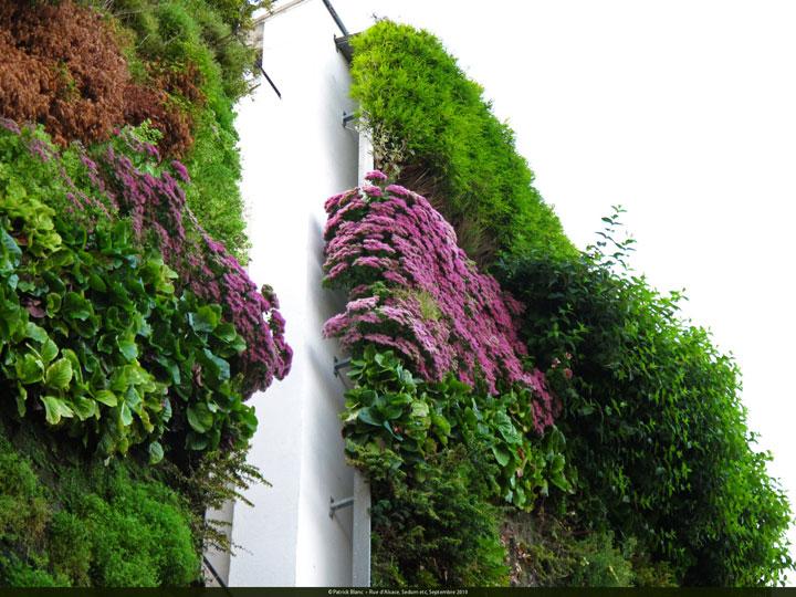 decouvrez-les-jardins-les-plus-etranges-et-les-plus-magnifiques-jardins-du-monde33