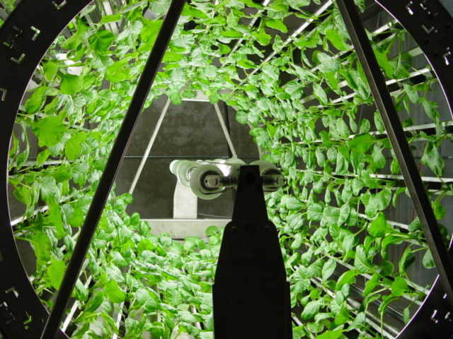decouvrez-les-jardins-les-plus-etranges-et-les-plus-magnifiques-jardins-du-monde45