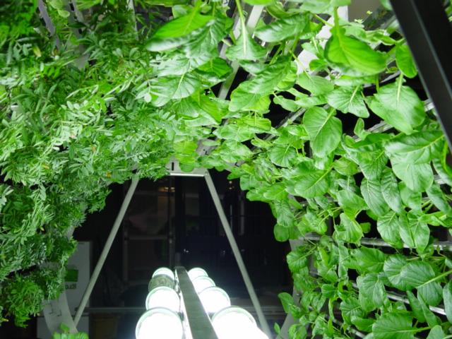 decouvrez-les-jardins-les-plus-etranges-et-les-plus-magnifiques-jardins-du-monde46