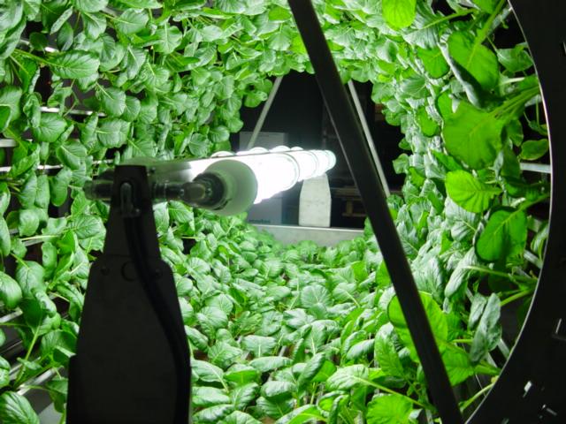decouvrez-les-jardins-les-plus-etranges-et-les-plus-magnifiques-jardins-du-monde47